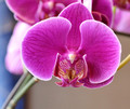 Orchids--and they are real!