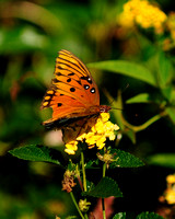Gail's Butterfly